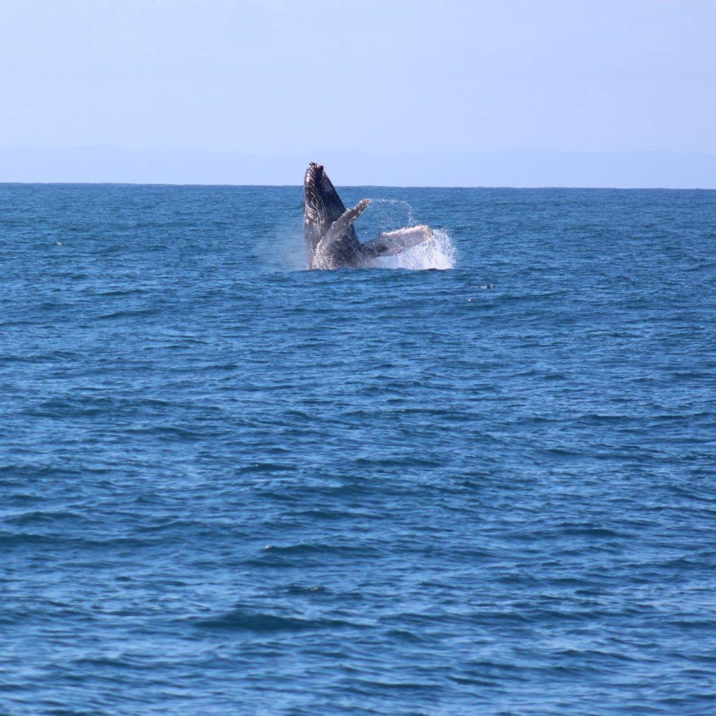 Humpback Whale Sighting. PC: Blue Dolphin, Kauai